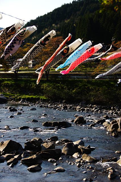 川で泳ぐ鯉のぼり