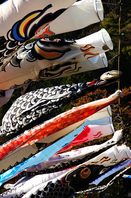 色々な鯉のぼりのフリー写真素材