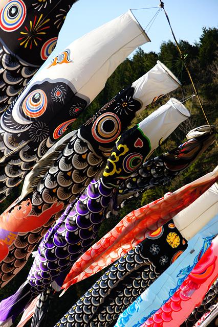 色々な鯉のぼりの無料写真素材