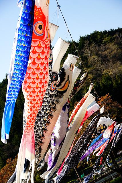 色々な鯉のぼりの写真素材 フリー