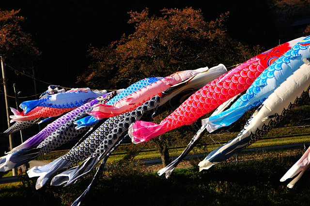 鯉のぼりのフリー写真素材