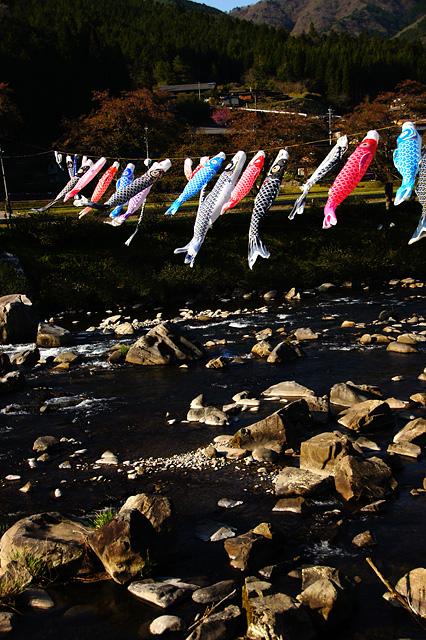 鯉のぼりの写真素材 フリー