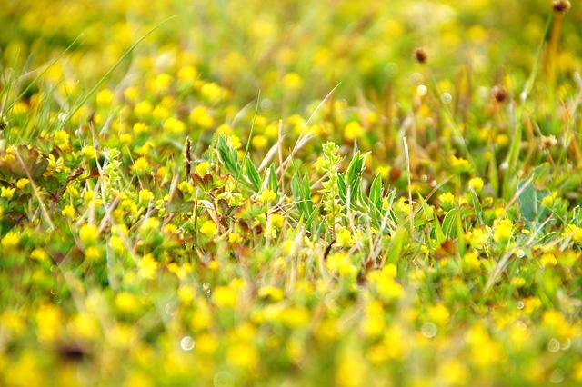 小さな黄色い花の写真素材 フリー