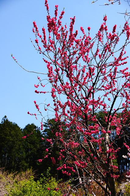 赤い花の写真素材 フリー