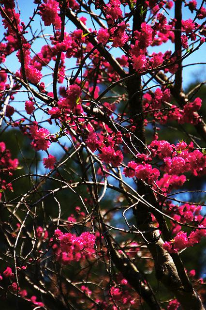 鮮やかな赤い花