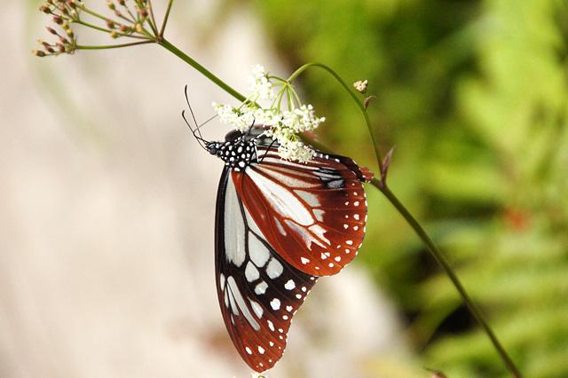 昆虫の写真素材 フリー
