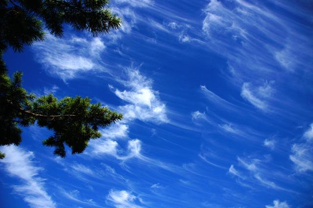 青空と松の枝