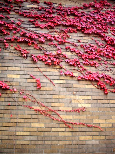 壁の紅葉の無料写真素材