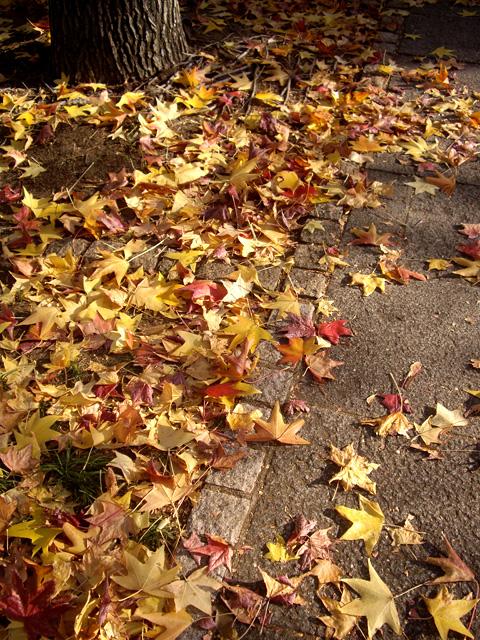 落ち葉の写真素材 フリー