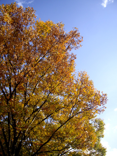 紅葉と青空の写真素材 フリー