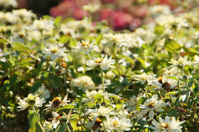 花壇に咲く白い花