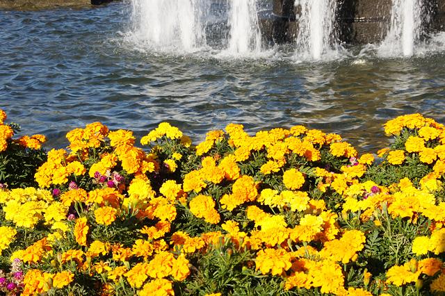 花壇の黄色い花