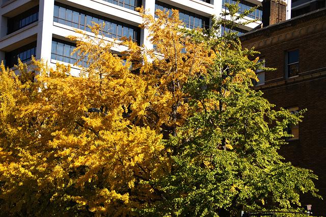 黄色と緑色の木