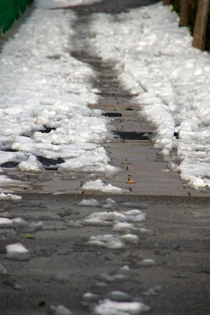 雪の真ん中の通り道