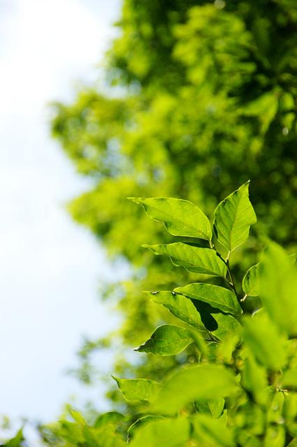 森と青空の無料写真素材