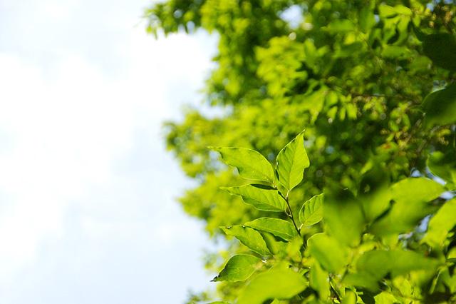森と青空の写真素材 フリー