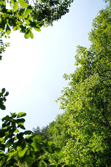森から見上げる空の写真素材 フリー