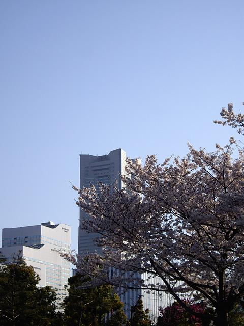 桜とランドマークの写真素材 フリー