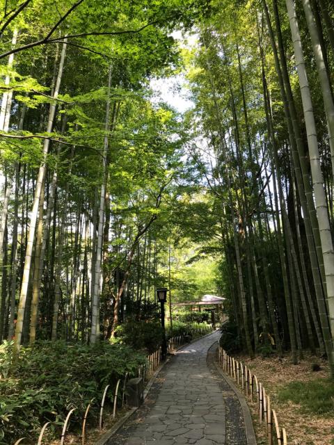 竹林の中の道の写真素材フリー