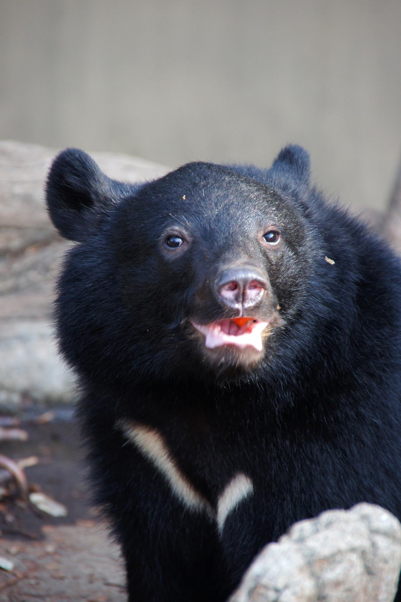 動物園の熊のフリー写真素材