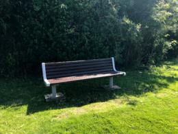 緑の中のベンチ