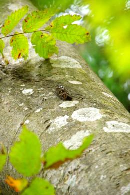 夏の昆虫の蝉