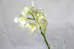 花瓶に入ったシンビジウムの花の無料写真素材