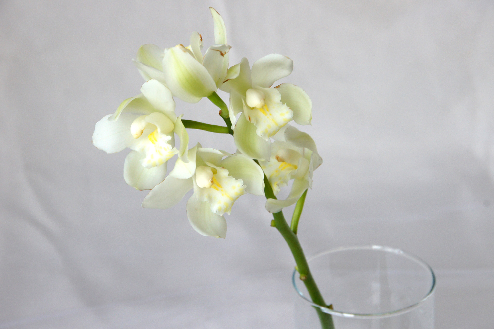 花瓶に入ったシンビジウムの花