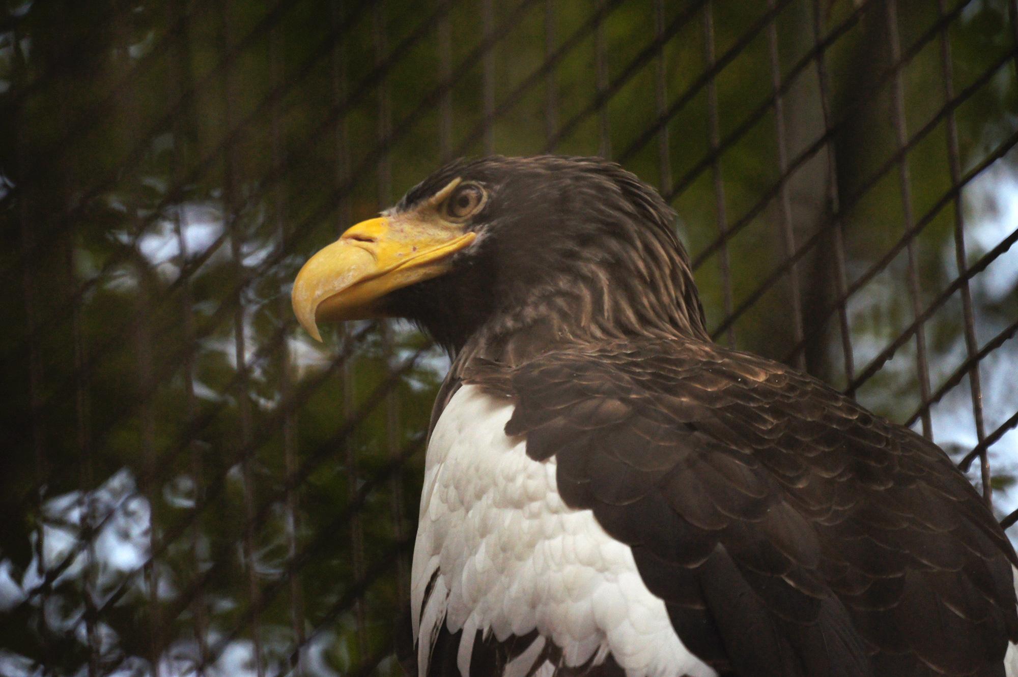 大鷲の写真のフリー素材