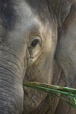 食事中の象の写真のフリー素材