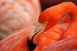 鮮やかな色のフラミンゴの写真の無料素材