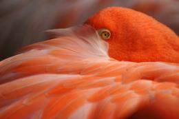 flamingoの写真の無料素材