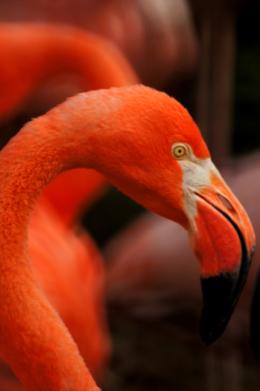フラミンゴの美しい曲線の写真のフリー素材