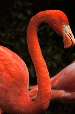 動物園のフラミンゴの写真のフリー素材