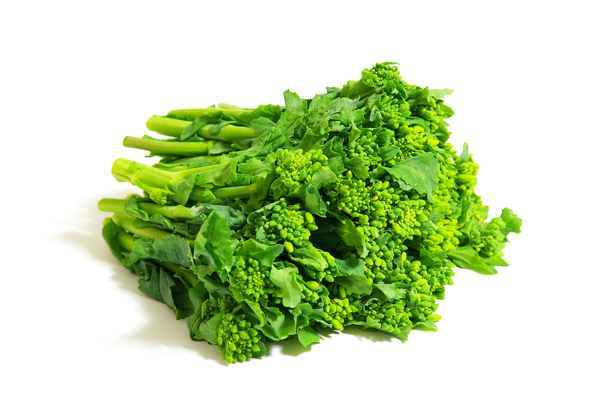 菜の花(野菜)のフリー画像素材