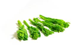 並べた野菜の菜の花のフリー画像素材