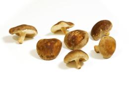 椎茸の無料画像素材