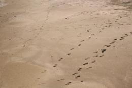 砂浜の足跡の無料画像素材