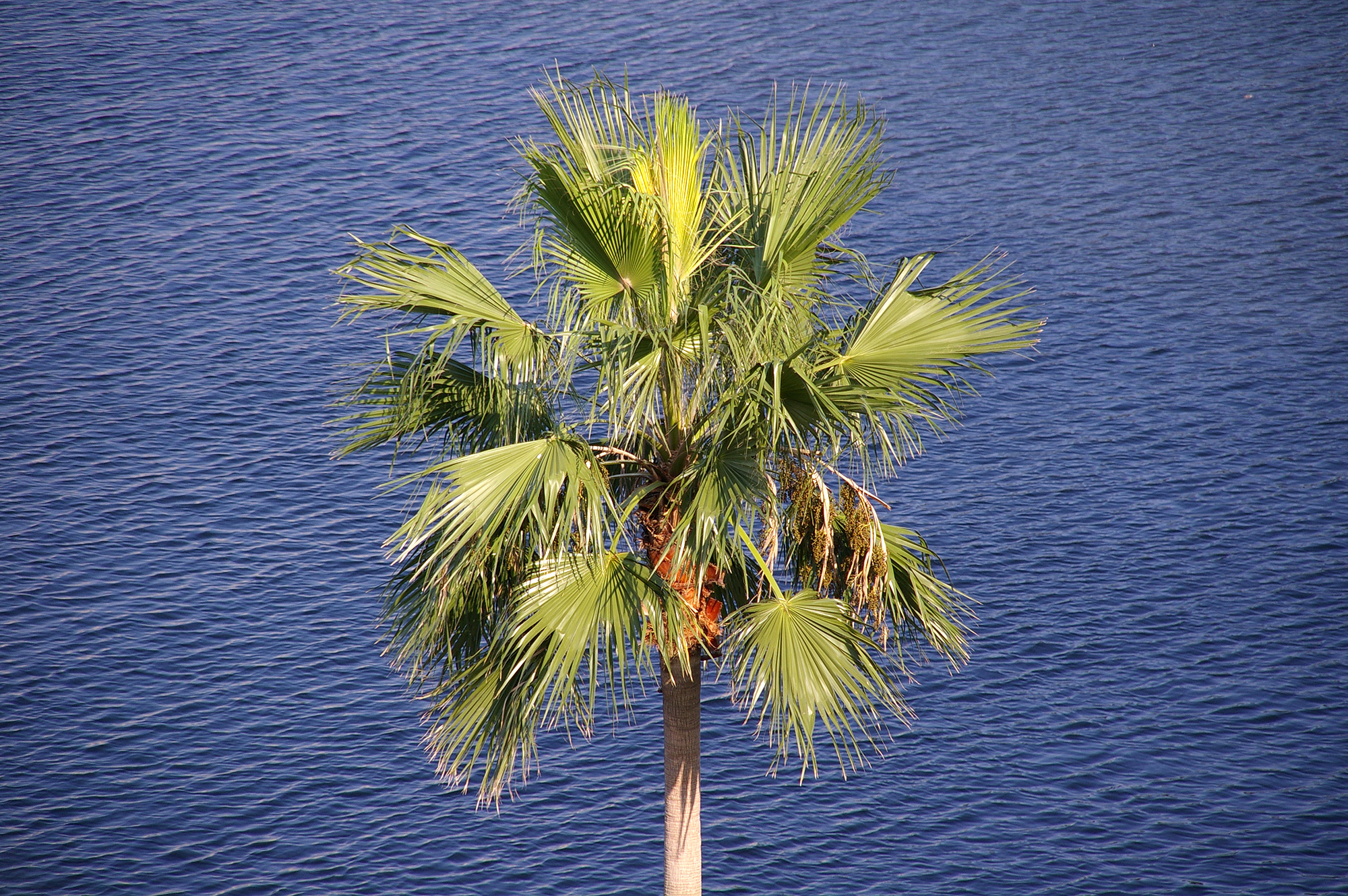 椰子の木と海
