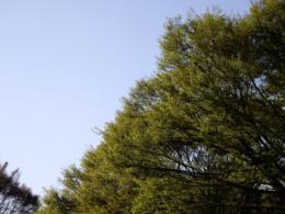 新緑の写真のフリー素材