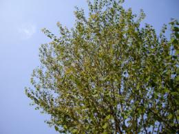 春の街路樹