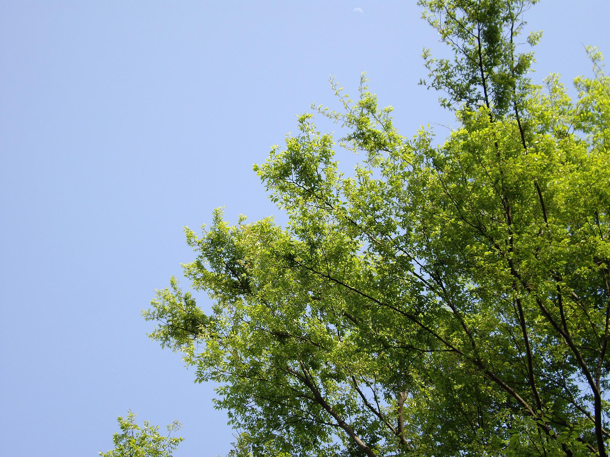 太陽に輝く葉の写真のフリー素材