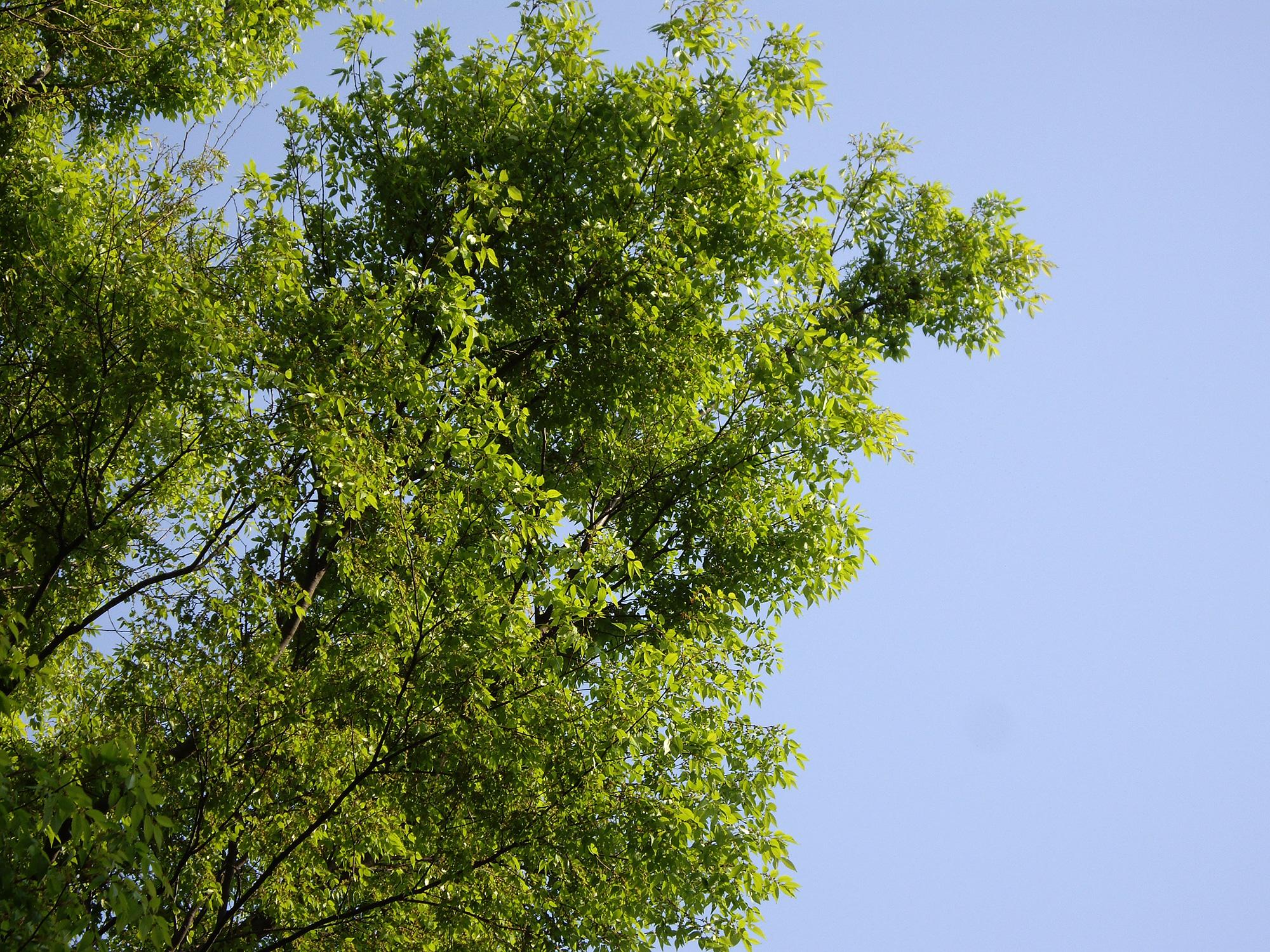爽やかな木