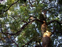 木漏れ日の無料写真素材