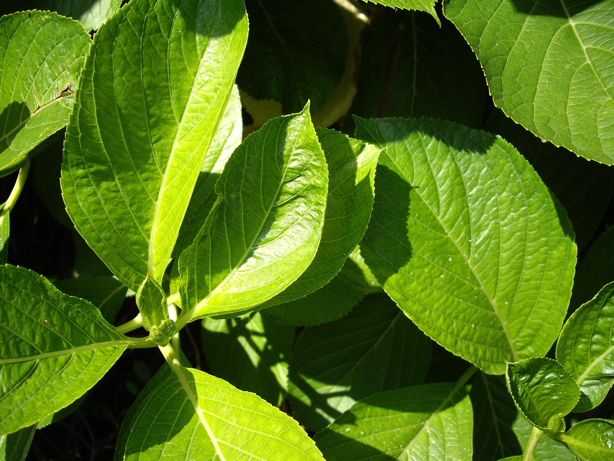 たくさんの葉っぱのフリー写真素材
