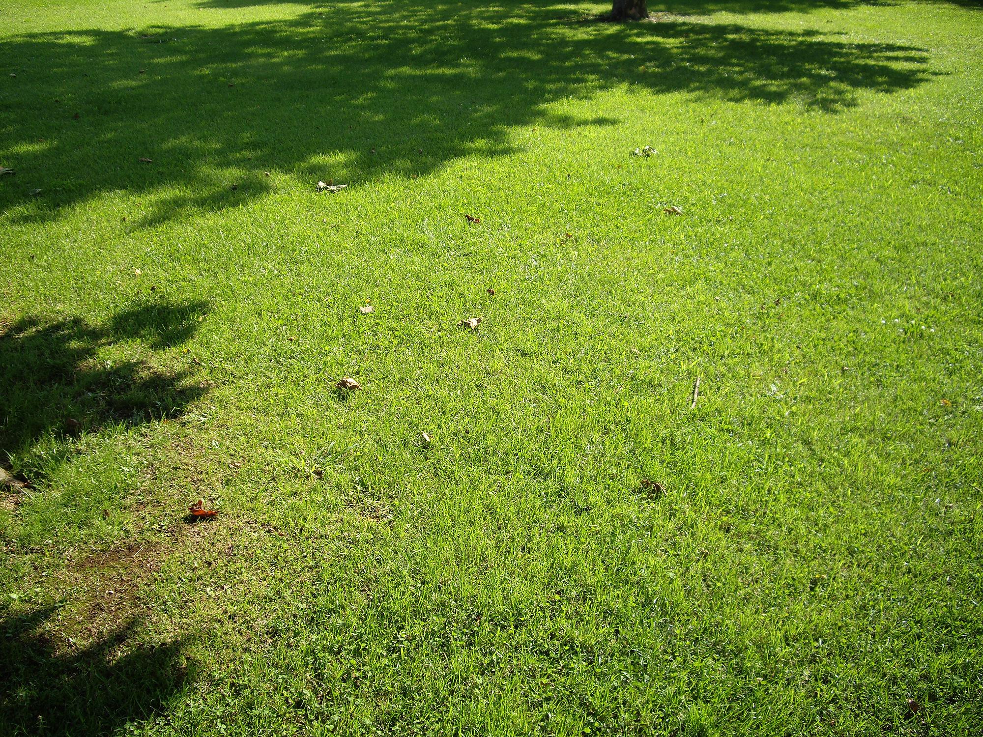 芝生の写真素材(無料)