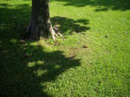 木の根元と芝生の写真素材(無料)