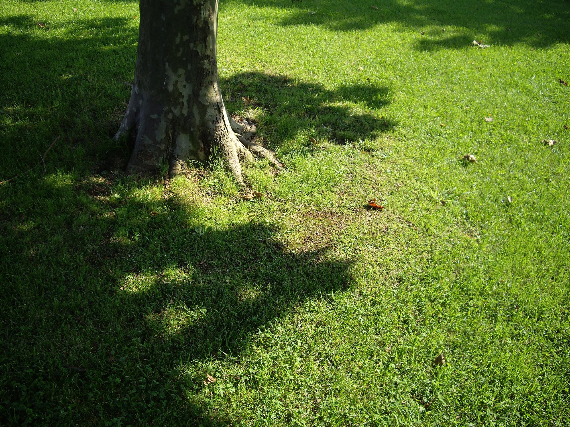 木の根元と芝生