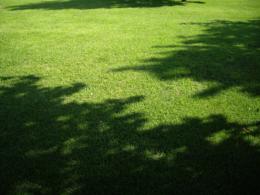 木々の影の写真素材(無料)