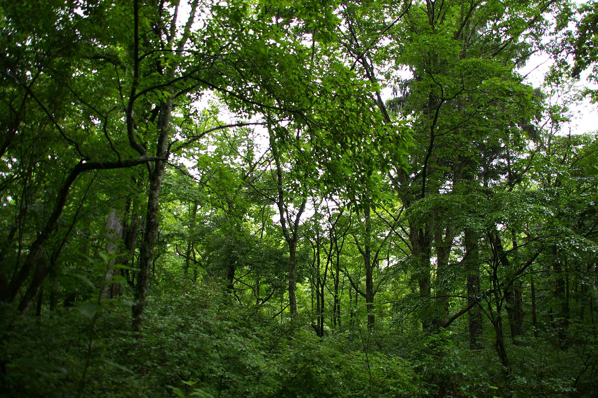 森の中の木々のフリー写真素材